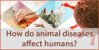 Interactive infographic on Animal diseases
