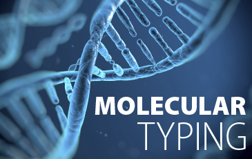 what is molecular typing