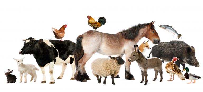Scientific Topic Salute Animale Autorita Europea Per La Sicurezza