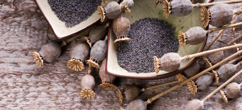 Opium alkaloids in poppy seeds: assessment updated | European Food