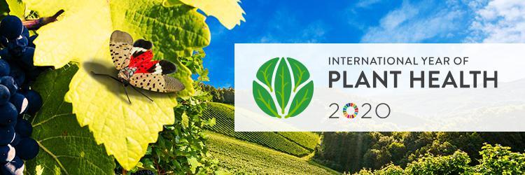 Scientific Topic Salute Dei Vegetali Autorita Europea Per La