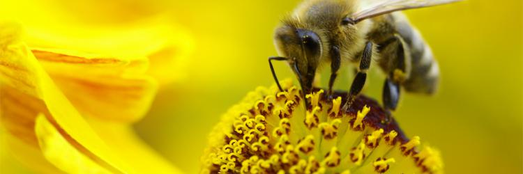 Bee health | European Food Safety Authority