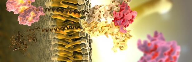 Endocrine disruptor molecule