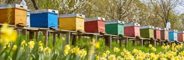 Neonicotinoids: risks to bees confirmed | European Food Safety